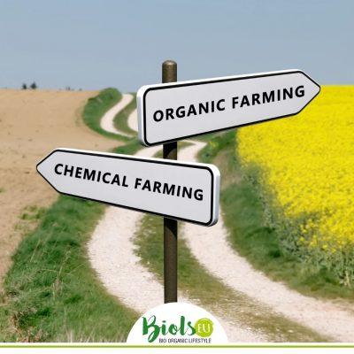 """Alt=""""Konventionelle Produkte scheinen günstiger zu sein als biologische"""""""