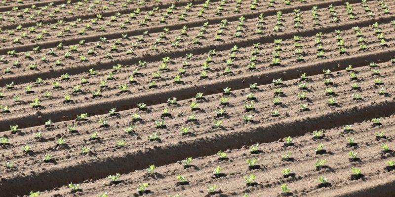 """Alt=""""L'agriculture conventionnelle non durable"""""""