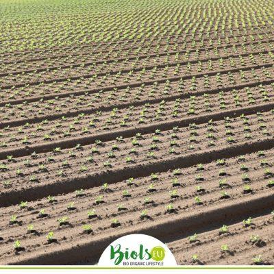 """Alt=""""Die konventionelle und nicht nachhaltige Landwirtschaft"""""""